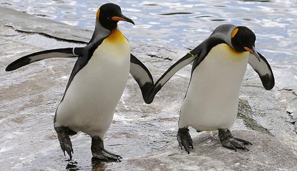 Photo of A 8 legcukibb állatfaj, amelynek tagjai gyakran vonzódnak saját nemükhöz