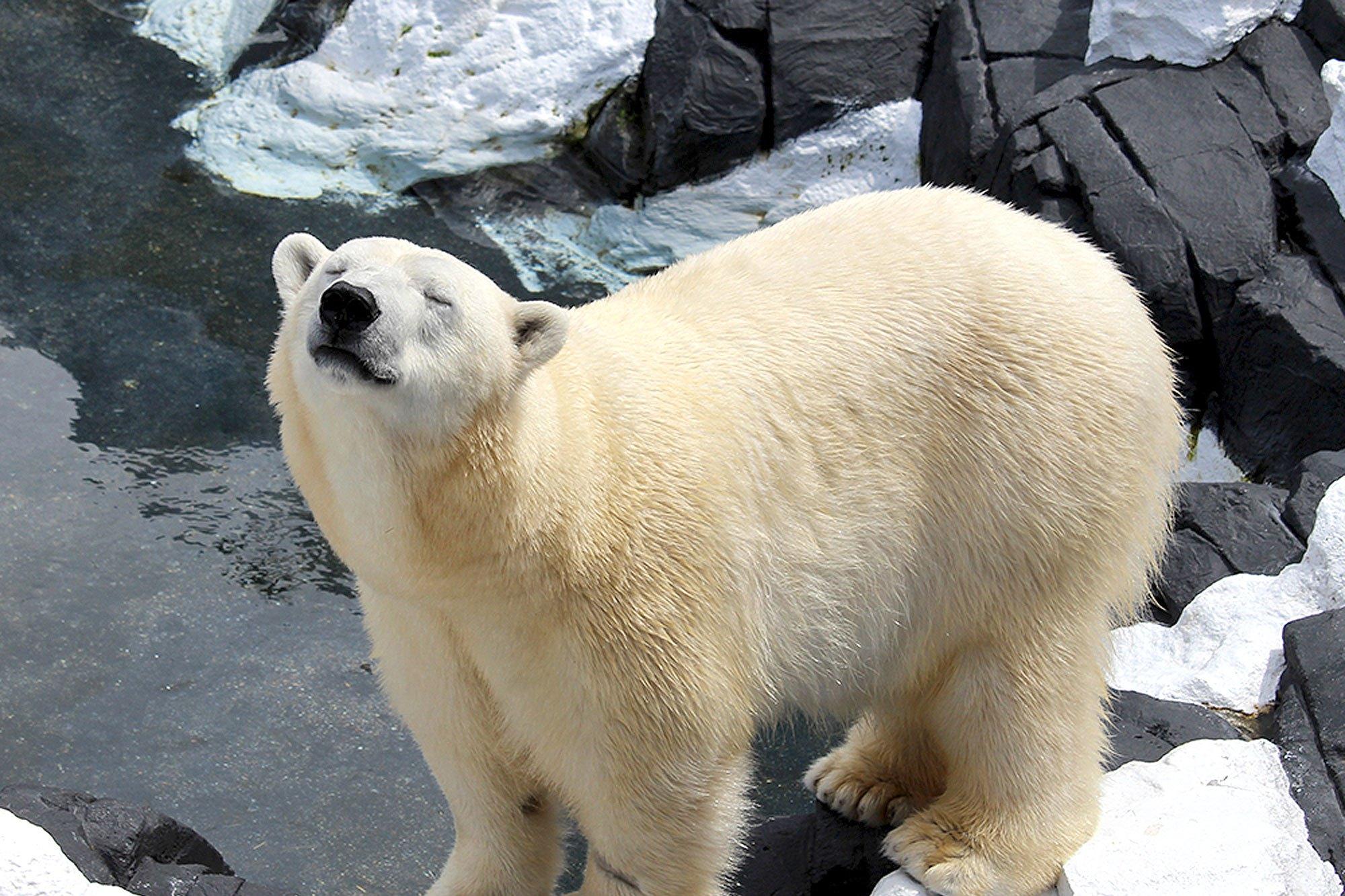 Photo of Belehalt a fájdalomba a leszbikus jegesmedve, miután elválasztották szerelmétől
