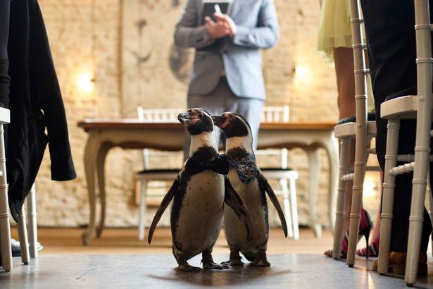 Photo of Meleg pingvinpárnak szerveztek csodálatos esküvőt